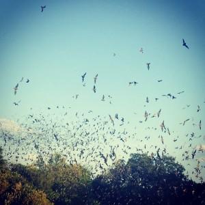 Bracken Cave - Bat Conservation International.